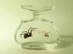 Till Death Do Us Part, Mating Pair Wet Specimen Black Widow Spiders In Vintage Perfume Bottle