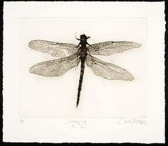 Mezzotints and Drypoints Archives - Sarah Gillespie