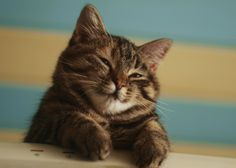 Fed onto Adorable Cats and Kittens Album in Animals Category Pretty Cats, Beautiful Cats, Animals Beautiful, Baby Animals, Funny Animals, Cute Animals, Animal Fun, Animals Images, Cute Cats And Kittens