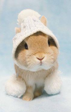 Yep. Baby bunny in a toboggan cap.
