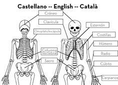 3 macarrons: Niños esqueleto a tmaño rela para descargar con los nombres de los huesos