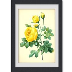 Vintage Botanical Print 14, yellow rose, produced from a vintage book plate, 8x11 wall art.