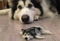 No, That's Not a Husky Puppy. Not a Husky Toy Either. Think Much, Much Stranger...