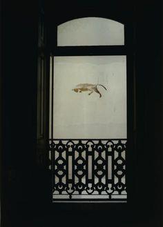 Falling cat | João Maria Gusmão + Pedro Paiva (2011)