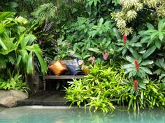 Last weekend, feeling the need for some more tropical inspiration I drove up to Sunnybank in Queensland to visit Dennis Hundscheidt's open garden. Heavy rain and flash flooding had been forecast fo… Formal Garden Design, Tropical Garden Design, Tropical Landscaping, Landscaping With Rocks, Tropical Plants, Tropical Gardens, Tropical Vibes, Balinese Garden, Bali Garden