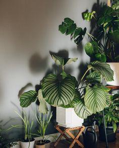 "Haarkon / India & Magnus (@haarkon_) on Instagram: ""The sun's coming in today 🌿☀️"" / Plants File"