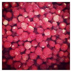 Mansikassa  |  Wild strawberries