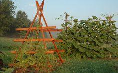 Make It: Squash Trellis Step-By-Step  http://www.rodalesorganiclife.com/garden/make-it-squash-trellis-step-step