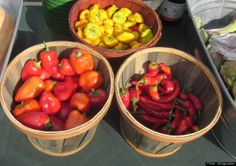 Top U.S. Farmers Markets Every Food Lover Should Visit