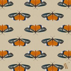 Moth 08 Ailanthus defoliator Eligma narcissus (in italics) 30 Day Drawing Challenge, Pretty Cool, Inktober, Moth, Patterns, Drawings, Illustration, Block Prints, Sketches