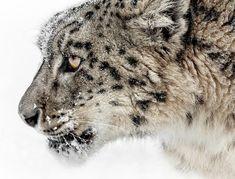 beautiful-wildlife
