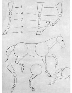 The Basic Construction of the Horse...