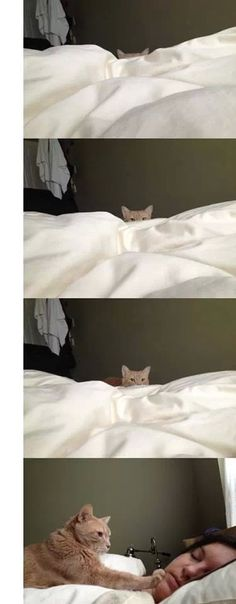 My cat does this when the alarm goes off... every single morning.