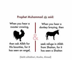 Bukhari, Muslim & Ahmad, really? Prophet Muhammad Quotes, Hadith Quotes, Ali Quotes, Muslim Quotes, Religious Quotes, Islam Hadith, Allah Islam, Alhamdulillah, Islam Quran