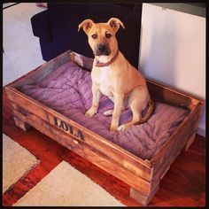 My own creation, Lola's new bad ass bed #Padgram