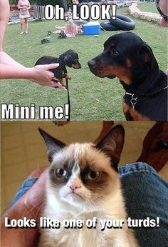 grumpy cat is so mean! I'm just trying to get every Grumpy cat pin. Grumpy Cat Quotes, Funny Grumpy Cat Memes, Cat Jokes, Funny Memes, Grumpy Kitty, Fat Cat Meme, Angry Cat Memes, Cat And Dog Memes, Cat Humour