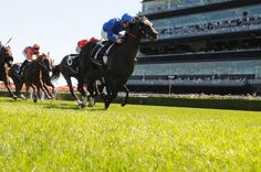 Randwick trial for Royal Ascot bound Holler : Australia Horse Breeding and Racing news updated daily, www.thoroughbrednews.com.au