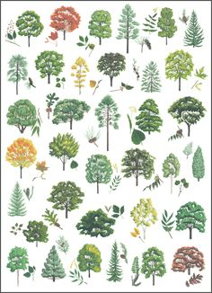 I'm just back from a tree identification class led by Judy Gibbs. My original intent was to just try to help lock in some of the tree ID stuff I've been learning recently in my field in… Trees And Shrubs, Trees To Plant, Garden Trees, Garden Plants, Botanical Art, Botanical Illustration, Tree Leaf Identification, Tree Information, Flora