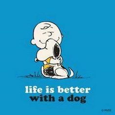 If I could ever find a dog that looks exactly like Snoopy I would take it in a heartbeat :)