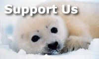 Sea Shepherd Conservation Society  Donate online!  Anything helps!