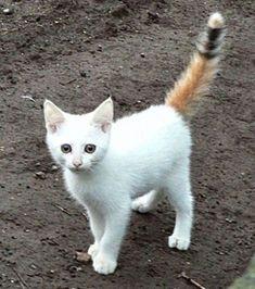 Diese 30 Katzen haben ihre Markierungen genau am richtigen Ort