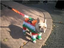 I want to do this to my chihuahua!