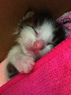 A Cats Work Is Never Done Kittens Cutest Cute Cat Names Kittens