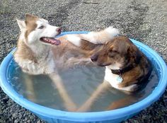 Nothin beats relaxin in the pool with your buddy....
