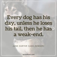 """Every dog has his day, unless he loses his tail, then he has a weak-end."" —June Carter Cash (singer) cute quote about dogs and puppies. If you love your dog like we do, visit www.embarkvet.com."