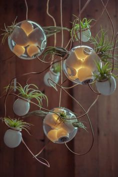 The new lighting concept from Omer Arbel of Canadian design firm Bocci. Each larger sphere houses two to three lighting elements and one or two planters. Lighting Concepts, Lighting Design, Air Plants, Indoor Plants, Small Plants, Plant Lighting, House Lighting, White Planters, Hanging Pendants