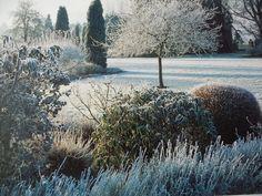 A garden in winter