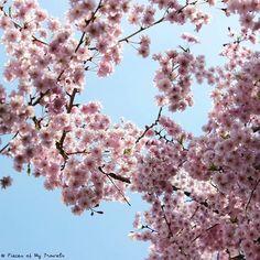 【piecesofmytravels】さんのInstagramをピンしています。 《Spring I'm so ready for you! 🌸 Takayama, Japan. April 2016.  #Takayama #Nagoya #Japan #sakuratime #cherryblossoms #flowers #instaflower #spring #hurryup #springcountdown #soready #layover #adventure #crewlife #flightattendantlife #japanlove #travel #travellife #travelgram #picoftheday #instapassport #bluesky #pieceofjapan #piecesofmytravels》