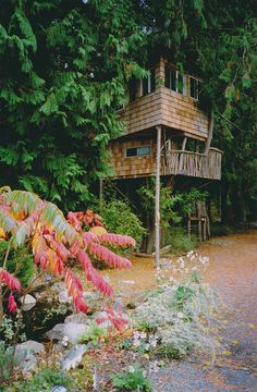 tree house virtually hidden by the trees.