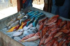 Colured fishes stand