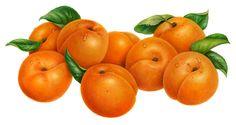 Orange's