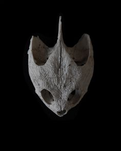 snapping turtle skull | STILL  (mary jo hoffman)
