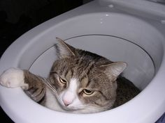 Teaching your cat to use the toilet is a bad idea for so many reasons — Ender the cat demonstrates one (or all) of them