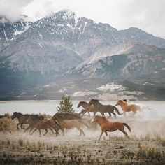 """""""A bunch of wild horses living on a remote beach. Unreal sights witnessed in the Yukon Territory.…"""" by Johannes Höhn Pretty Horses, Beautiful Horses, Animals Beautiful, Cute Animals, Scenery Photography, Tumblr Photography, Horse Photography, Landscape Photography, Horse Girl"""