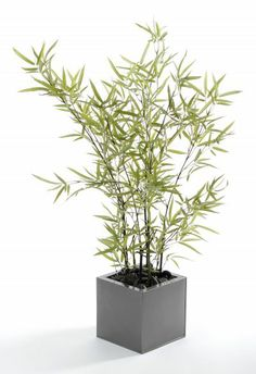 """Artificial 3ft 2"""" Mini Bamboo Tree with Natural Black Stems (P070D) from Artplants.co.uk #bamboo #bambootree #artificialtree #artificialplant #houseplant"""