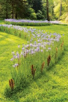 Looking for plants that deer won't eat? Grow these 20 deer resistant plants, including shrubs, perennials, groundcovers and annuals. Meadow Garden, Moss Garden, Garden Shrubs, Rain Garden, Flowers Garden, Shade Garden, Garden Beds, Spring Flowers, Garden Pictures