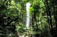 Brasil: Mata Atlântica / Atlantic Forest - Suprême