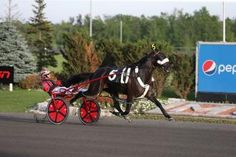 Mohawk: Wiggle It Jiggleit looks to rise in history's ranks with Canadian Pacing Derby win | Daily Racing Form