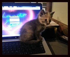Cats at The Bar: Tumblr Fan find this amazing photo from Katzenworld
