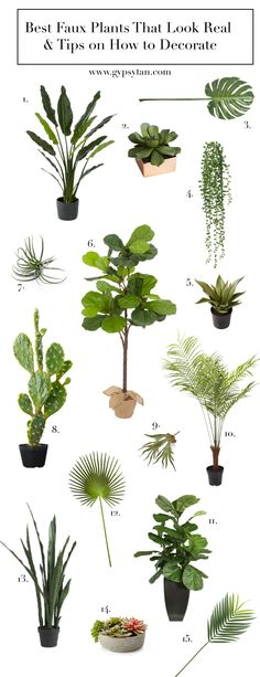 """Best Realistic Faux Plants for Your Home & Tips on How to Decorate; faux fiddle lead fig, 01: bird of paradise // 02: succulent with copper pot // 03: monstera leaf // 04: trailing succulent // 05: large aloe plant // 06: faux fiddle leaf tree // 07: air plant // 08: prickly pear cactus // 09: staghorn fern // 10: palm tree // 11: 40"""" fiddle leaf fig in pot // 12: fan palm // 13: snake plant // 14: succulent in pot // 15: palm leaf //"""