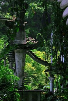 Stairs to Heaven . Las Pozas Escaleras al Cielo. Las Pozas Stairs to Heaven . Places To Travel, Places To See, Places Around The World, Around The Worlds, Stairs To Heaven, Fantasy Places, Fantasy Landscape, Mexico Travel, Abandoned Places