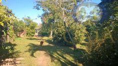 Gaia Bolsa de Imoveis Foto link Chácara  rural à venda, Parque Dante Marmiroli, Sumaré.