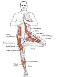 Image result for psoas muscle stretching strengthening