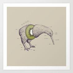 Kiwi Anatomy Art Print by William McDonald