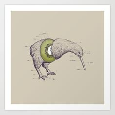 Kiwi Anatomy Art Print by William McDonald