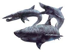 Prehistoric Sharks...